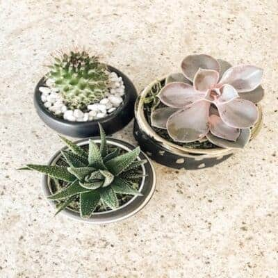 3 mini planters with succulents and cactus