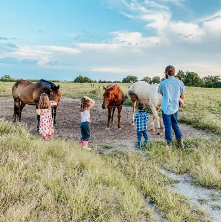 family visiting the horses in the pasture
